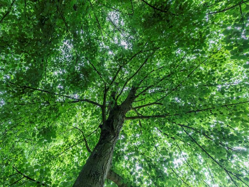 Suntech Energy investeert in bomen